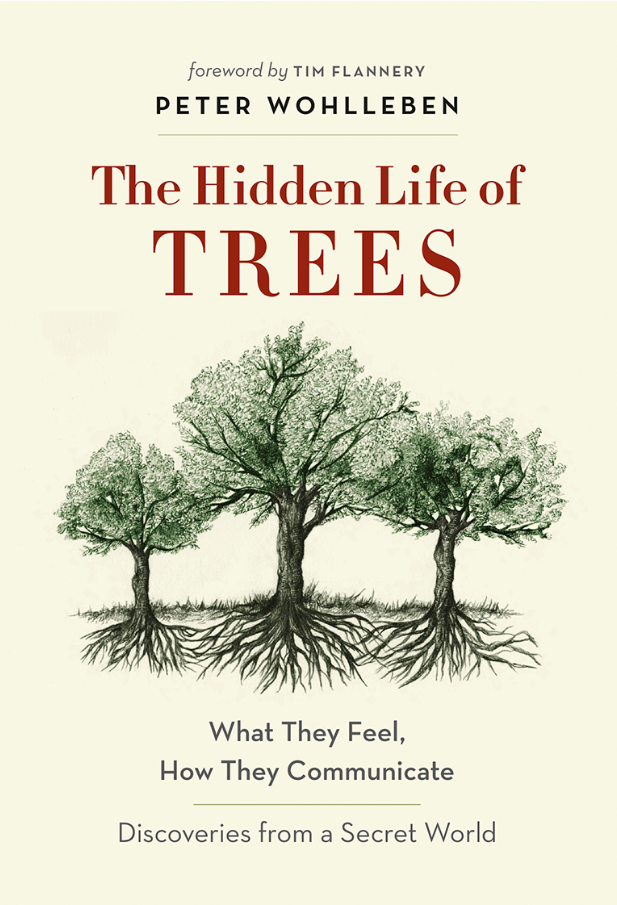 Baltimore's hidden life of trees